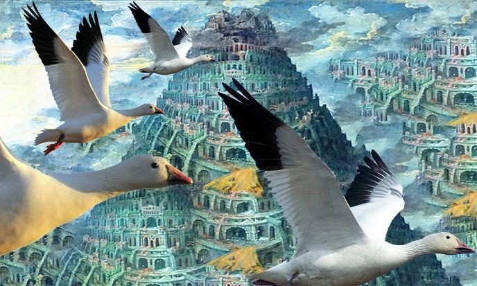 Planet Babel