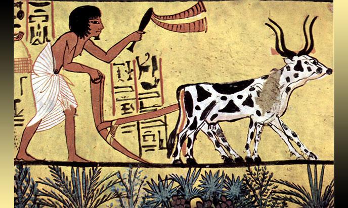 Farming Fever