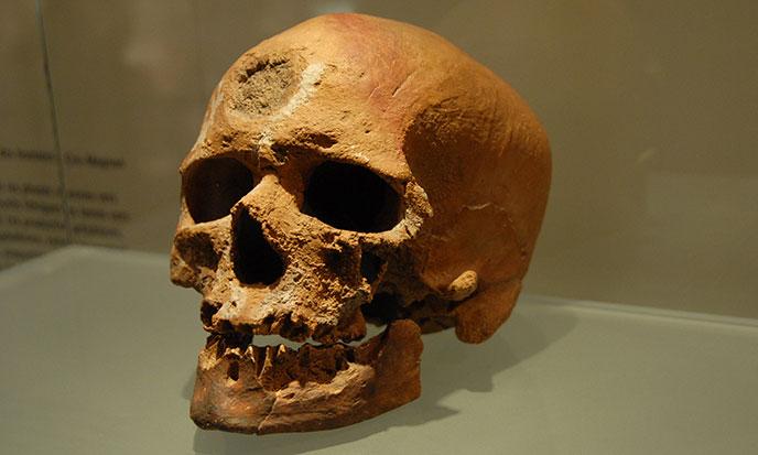 Crâne-Musée-Préhistoire-Verdon-688po