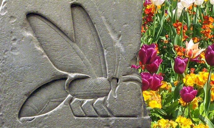 apiculture-sumer-fleurs-688po