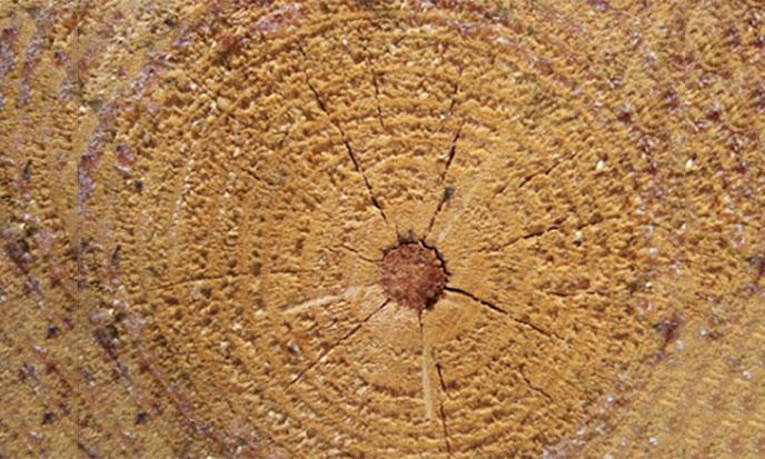 arbre-coupe-spirale-688po