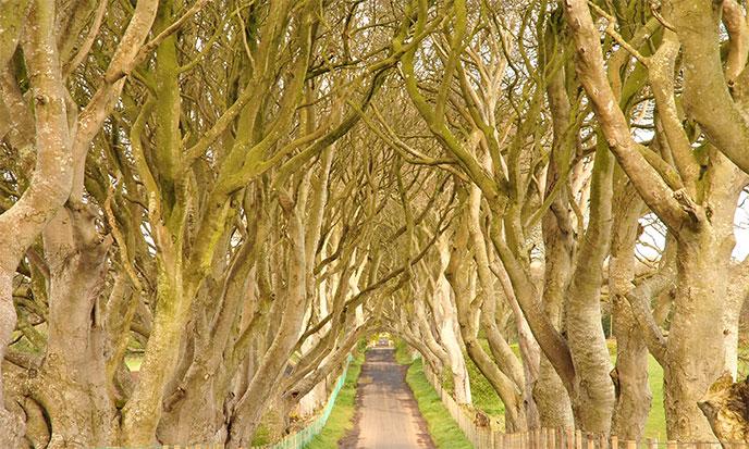 arbres-branches-voute-voie-milieu-688po