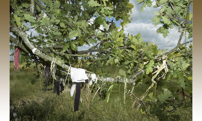 avebury-west-kennet-arbre-voeux-688po