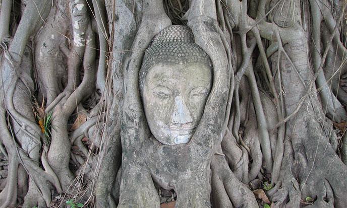 bouddha-banyan-688po