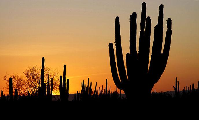 castaneda-sonoran_desert_sunset-wikip-688po