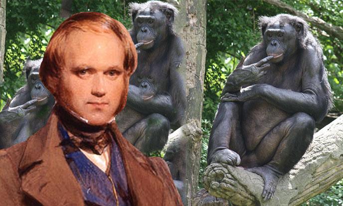 charles-darwin-et-des-bonobos-688po