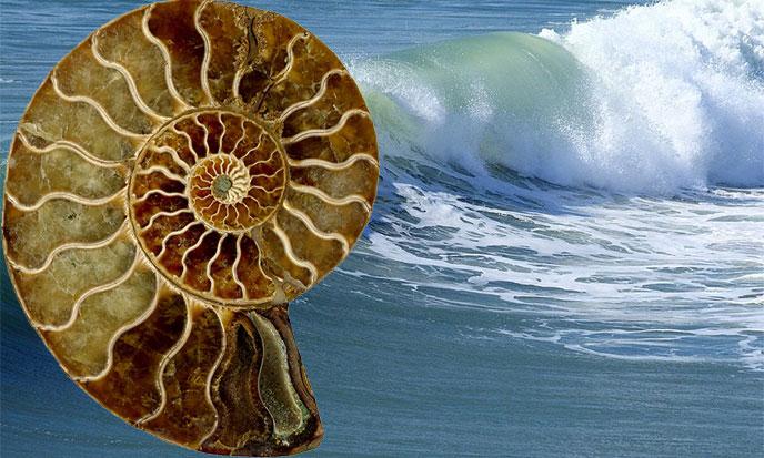 coquillage-spirale-mer-pixabay-vague-688po