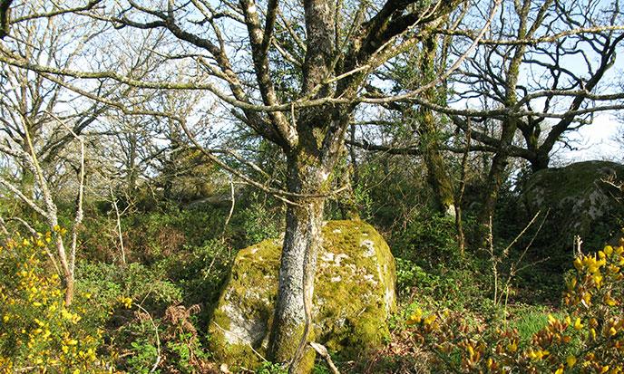 Brocéliande Mère Forêt