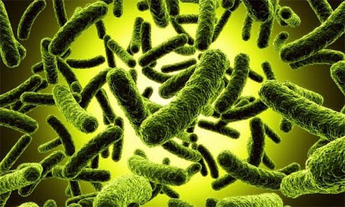 genetique-bacterie-688po