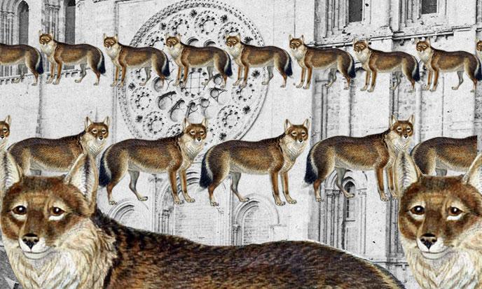 loups-queuleuleu-chenille-cathedrale-domaine-public-688po