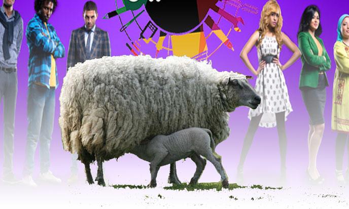 moutons-telerealite-sk-wikip-688po