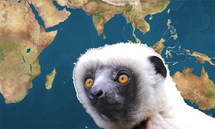 ocean-indien-lemurien-688po