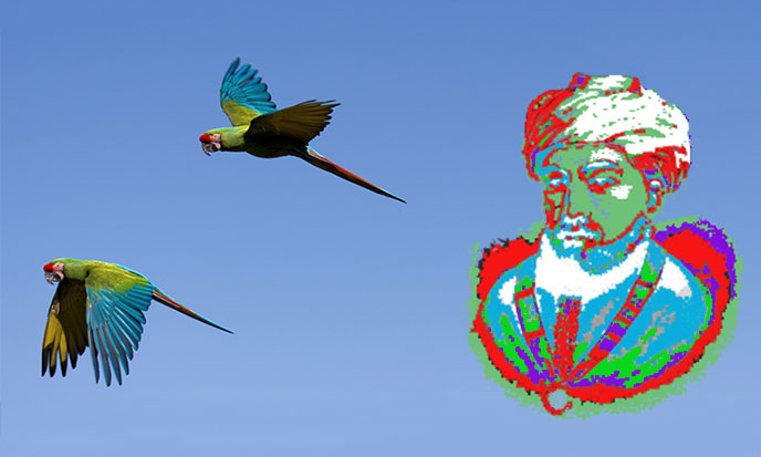perroquets-vol-maimonides-688po