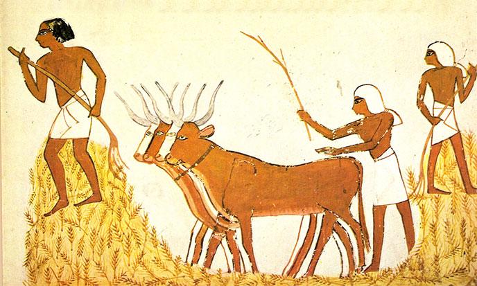revolution-neolithique-688po
