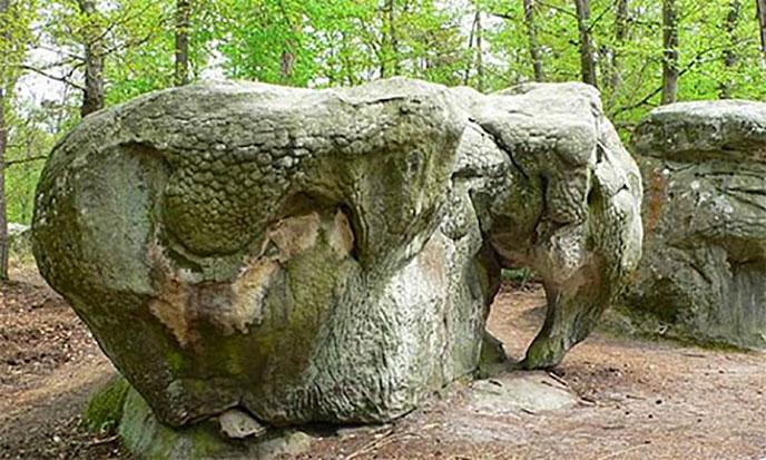 rocs-fontainebleau-animaux-elephant-688po