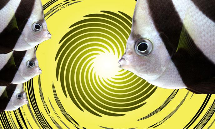 scalaire-poissons-spirale-jaune-sk-688poi