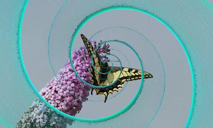 scalaire-spiral-papillon-688po