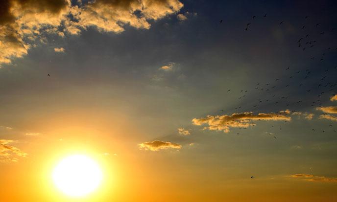 soleil-levant-pixio-688po