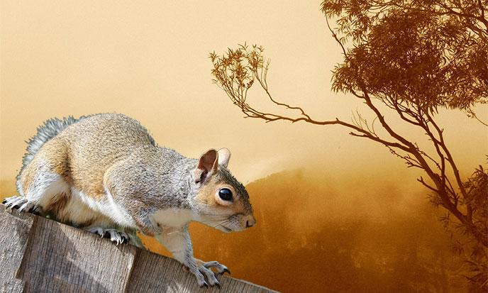 squirrel-chine-pixabay-kervor-688po