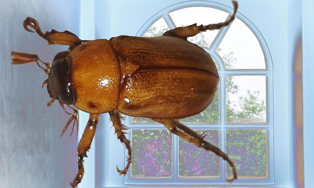 Un scarabée peut tout changer, par SKI Stef Kervor Infographie - Domaine Public
